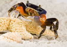 Free Crab Stock Photo - 2104600