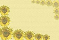 Sunflowers Background Stock Image