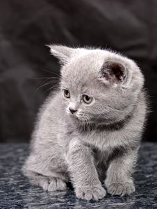 Free Kitten27 Royalty Free Stock Photo - 2107215