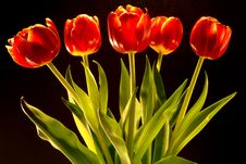 Free Tulip Bouquet Stock Photo - 2108430