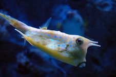 Free Tropical Yellow Fish Royalty Free Stock Images - 2108439