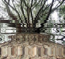 Free Tree Trunk Reflection Royalty Free Stock Image - 2109376