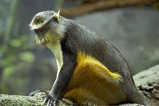 Free Black & Brown Monkey Stock Photo - 2109680