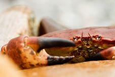 Free Crab Stock Photos - 21000613