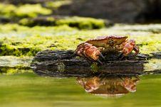 Free Crab Royalty Free Stock Photos - 21000638