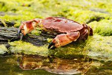Free Crab Stock Image - 21000671