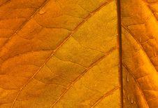Free Yellow Leaf Royalty Free Stock Image - 21002796