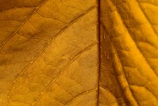 Free Yellow Leaf Stock Images - 21002824