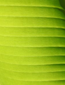 Free Leaf Stock Photo - 21003750
