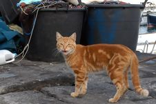 Free Sea Cat Stock Photos - 21003833