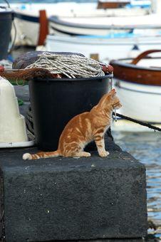 Free Sea Cat Waiting Stock Image - 21003851
