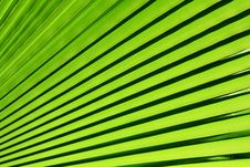 Free Green Palm Leaf Background Royalty Free Stock Images - 21003899