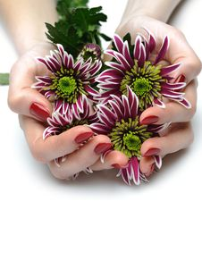Free Beautiful Manicured Hands With Purple Flowers Stock Images - 21005214