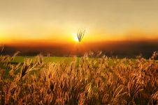 Free Grass Lily On Sunset Background Stock Images - 21005804