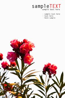 Free Tropical Pink Flower Stock Image - 21006161