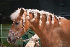 Free Horse Stock Photo - 21006480