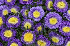 Free Flowers Background Stock Image - 21007051