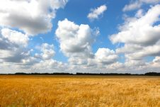 Free Wheat Field Of Gold With Cloudscape Royalty Free Stock Photography - 21007387