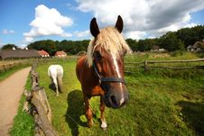 Free Brown And White Horse Grazing Stock Photo - 21007400