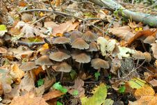 Free Mushroom In The Autumn Forest Royalty Free Stock Photography - 21007537