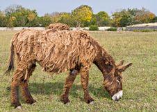 Free Dreadlocks Donkey Royalty Free Stock Images - 21008439