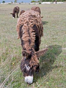 Free Dreadlocks Donkey Royalty Free Stock Photography - 21008457