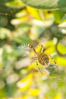 Free Big Spider On A Web Stock Photography - 21009332