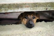 Free Puppy Stock Photo - 21009340