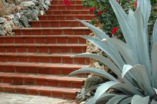 Free Stairs And Cactus Royalty Free Stock Photography - 21009487