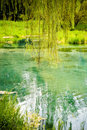 Free Willow Tree And Blue Lake Stock Image - 21014311