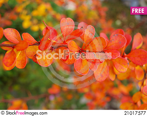 Free Autumn Leaves Royalty Free Stock Photography - 21017577