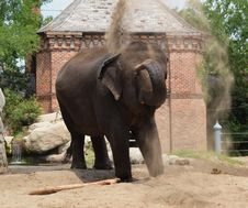 Free Elephant At Play Royalty Free Stock Image - 21010116