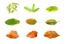 Free Leaf Set Isolate Stock Photo - 21011090