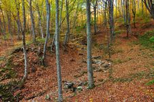 Free Autumn Forest Royalty Free Stock Photos - 21012358