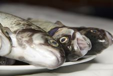 Free Trouts Waiting For Grilling Royalty Free Stock Photography - 21012517