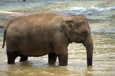 Free Pinnawela Elephant Orphanage In Sri Lanka Stock Photography - 21013982