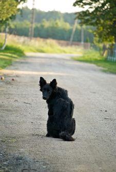 Free Longed Dog Stock Images - 21014004
