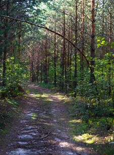 Free Forest Walk Stock Photo - 21015020