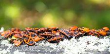 Beetles Stock Image
