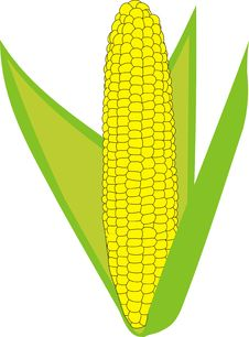 Ripe Corn Stock Images