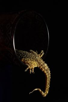 Free Gecko´s Tail Royalty Free Stock Photos - 21016808