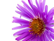 Free Flower With Lilac Petal Stock Photography - 21017802