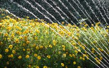 Free Watering Flowers Royalty Free Stock Images - 21018329