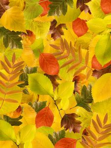 Free Different Autumn Leaves Background Royalty Free Stock Image - 21018616