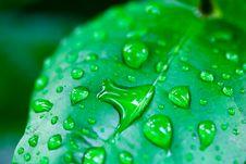 Free Fresh Green Leave Stock Photo - 21018830