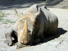 Free Rhiniceros Stock Photo - 21019210