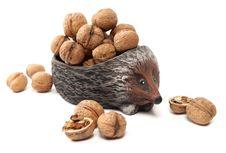 Free Hedgehog With Walnuts Royalty Free Stock Photo - 21019875