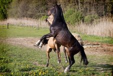 Free Horses In The Field Royalty Free Stock Photos - 21019998