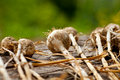 Free Biological Garlics Royalty Free Stock Photos - 21027178