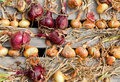 Free Biological Onions Royalty Free Stock Image - 21027806